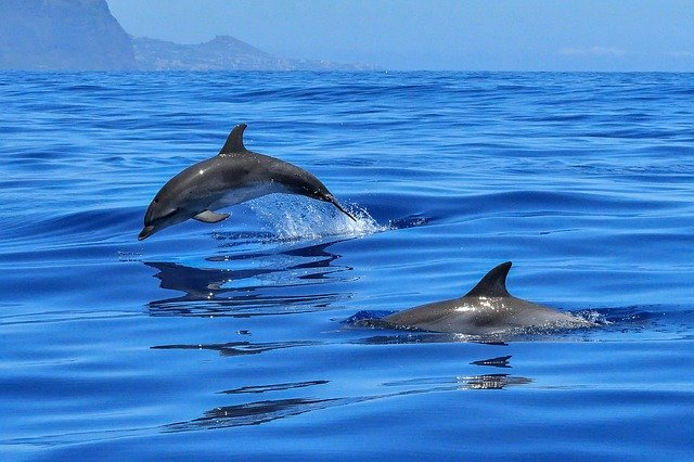 Swim with the dolphins in Mauritius